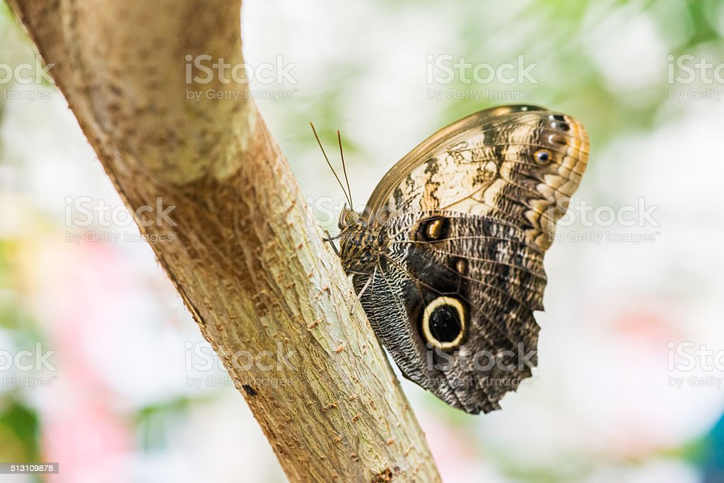 Butterfly Kaliga sits on a tree trunk stock photo