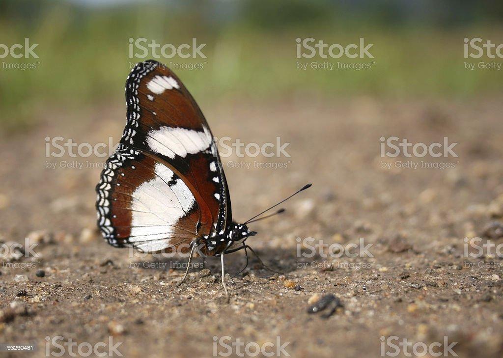 butterfly, kenya stock photo