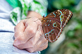 A butterfly landed on this seniors arthritic hand and stayed there while I took it's picture