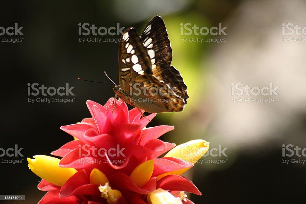 Butterfly landing on flower stock photo