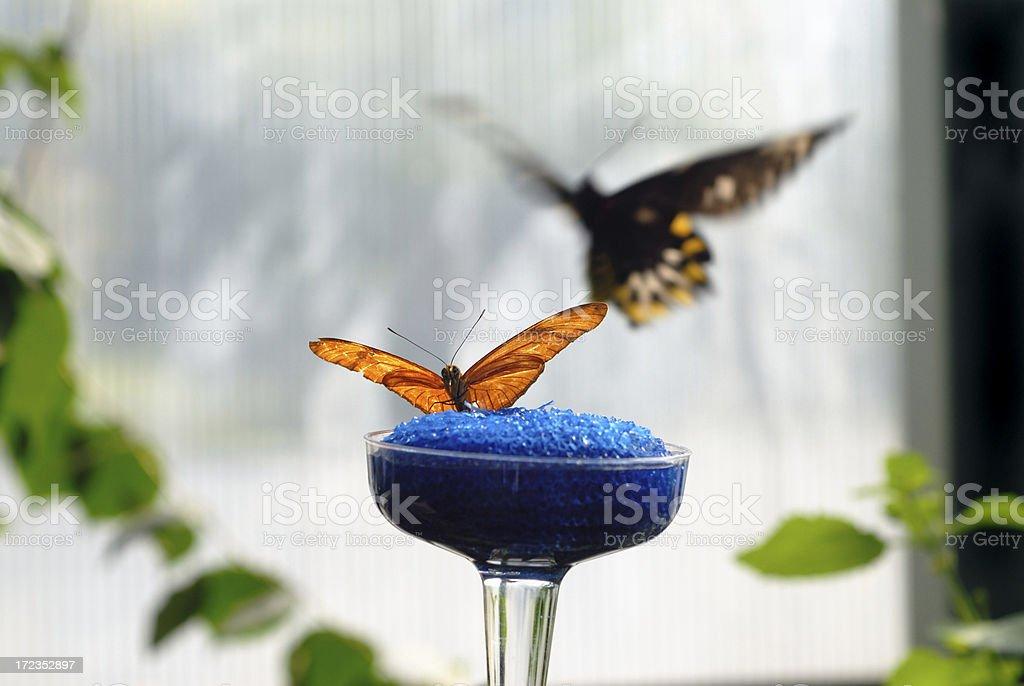 Mariposa Landing almohadilla foto de stock libre de derechos