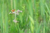 Little orange butterfly leans on small flowers in a meadow