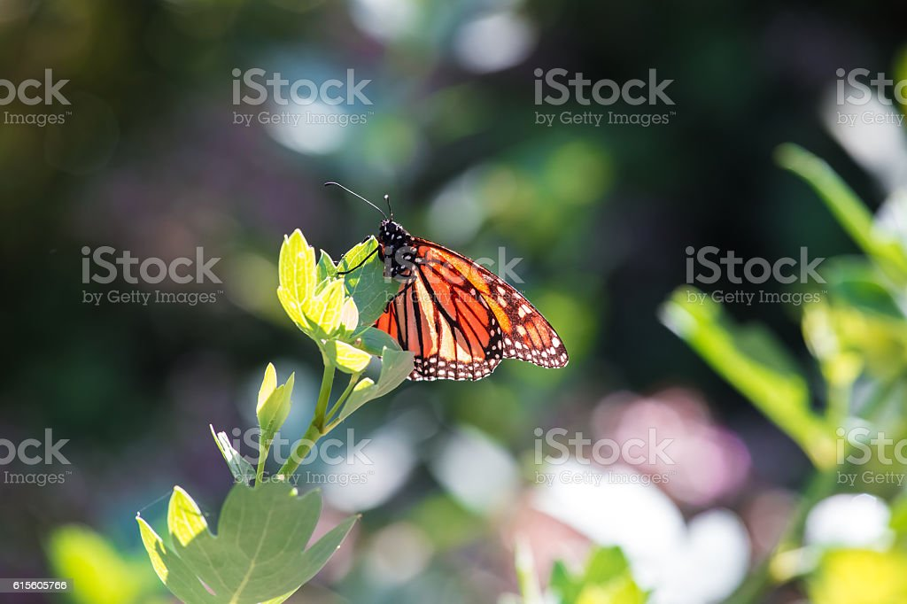 Butterfly looking for pollen on a flower near a park stock photo