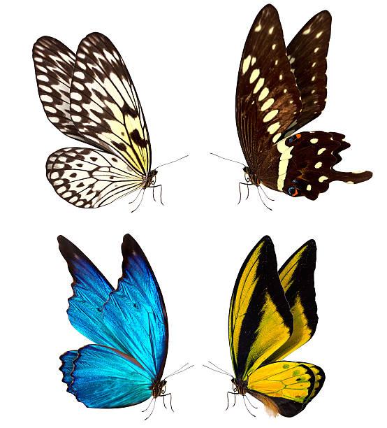 Butterfly macro background picture id465931149?b=1&k=6&m=465931149&s=612x612&w=0&h=uan9b dlh9agqcs2fld4qzc3 k44zoyprinxx4deheu=
