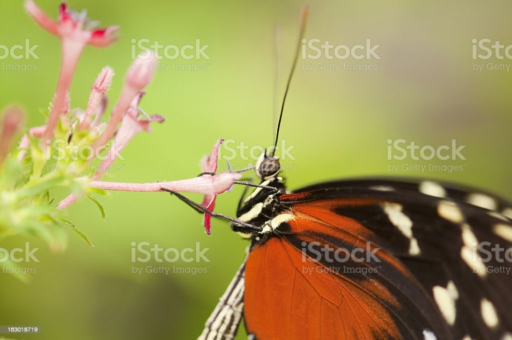 Butterfly macro royalty-free stock photo