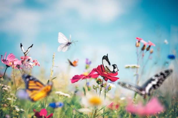 Butterfly meadow picture id1205668033?b=1&k=6&m=1205668033&s=612x612&w=0&h=cx6mm5kyido1cjdv8 kdrk1a8ks7v wxsdwnoiittmi=