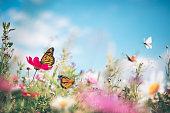 istock Butterfly Meadow 1206854764