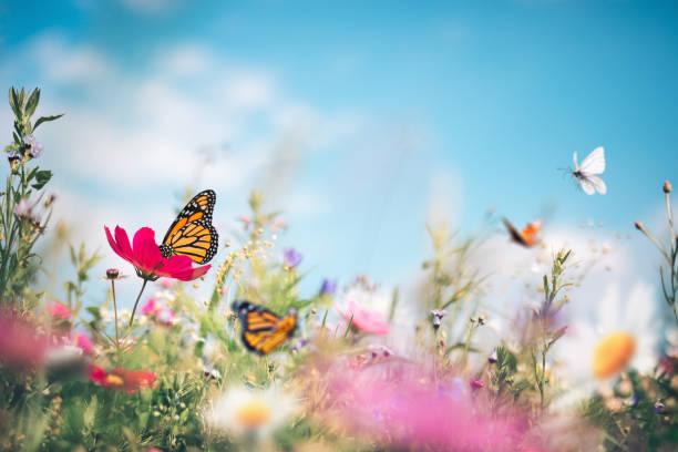 Butterfly meadow picture id1206854764?b=1&k=6&m=1206854764&s=612x612&w=0&h=0z9hg  i5rqvnloq4ydp eyxryhoyb5lp0quaskdh y=