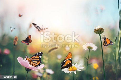 Summer garden full of colorful flowers and butterflies flying around.