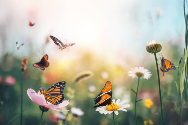 Butterfly meadow picture id1206854768?b=1&k=6&m=1206854768&s=612x612&w=0&h=35w aor6 wgdfil13s3xwtfge0metwlctw6dhpp1gzi=