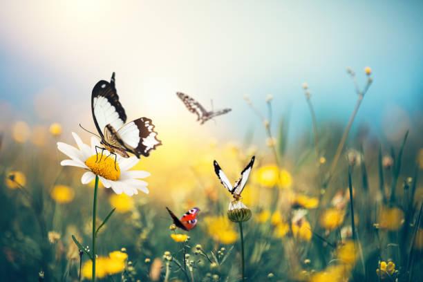 Butterfly meadow picture id906062478?b=1&k=6&m=906062478&s=612x612&w=0&h=hl  jy4wkyhfrscemhqmi7bq1s8ku3xvfg jtxcyuve=