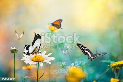 Summer meadow with butterflies.