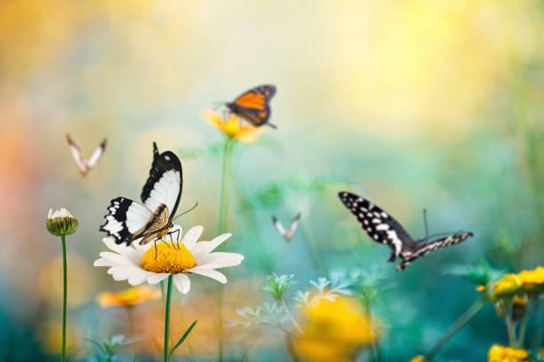 Butterfly meadow picture id906064544?b=1&k=6&m=906064544&s=612x612&w=0&h=3msuatfbatalde3iblp1zr7hevuimvkbpziwzammg4o=