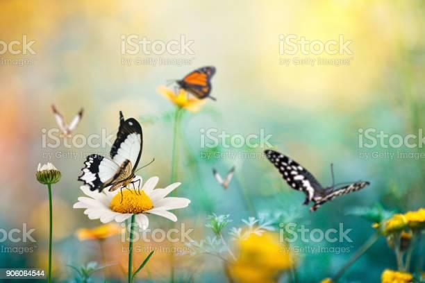 Photo of Butterfly Meadow