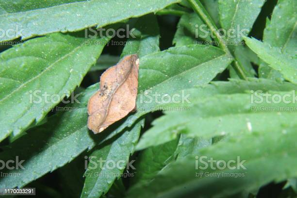 Butterfly moth picture id1170033291?b=1&k=6&m=1170033291&s=612x612&h=ge6qvupppaycrpoiveyhdrfz9ywzuabjov6vbqnzkwm=