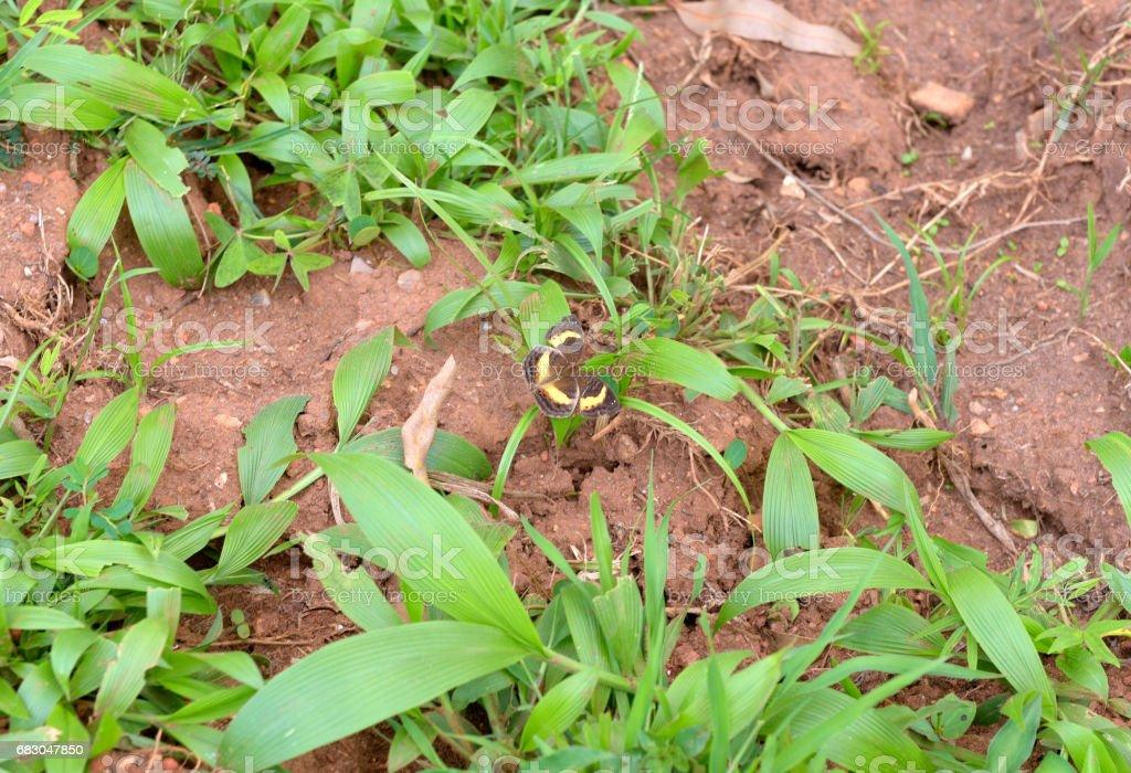 Butterfly of Rwanda zbiór zdjęć royalty-free