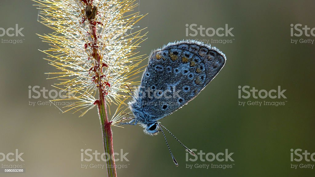 Butterfly on a blade of grass. royalty-free stock photo