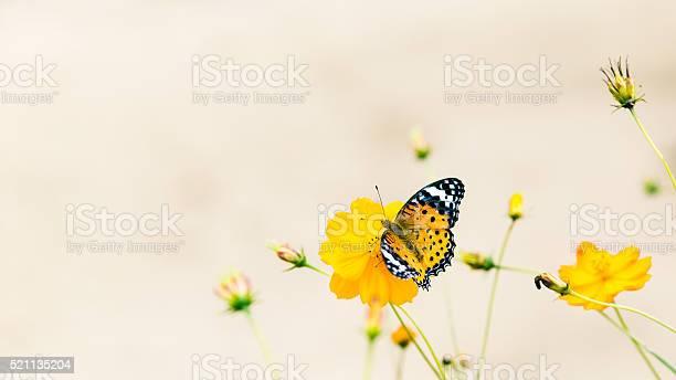 Butterfly on a daisy in a field picture id521135204?b=1&k=6&m=521135204&s=612x612&h=kxselgo0rm96 p43z hxmtiqshrpxsozeagst4kmyew=