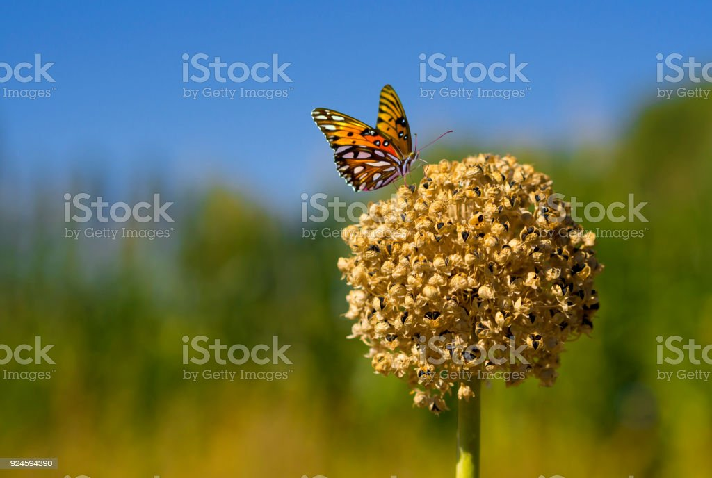 butterfly on a dried plant stock photo