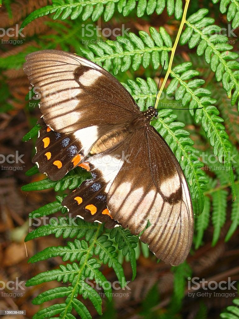 Butterfly on a fern royalty-free stock photo