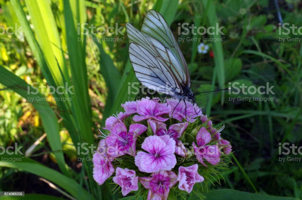 Butterfly on a flower in the garden royalty-free stock photo