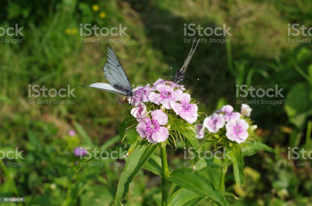 Papillon sur une fleur dans le jardin photo libre de droits