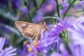 Closeup beautiful butterfly in a summer garden. Moth on a flower
