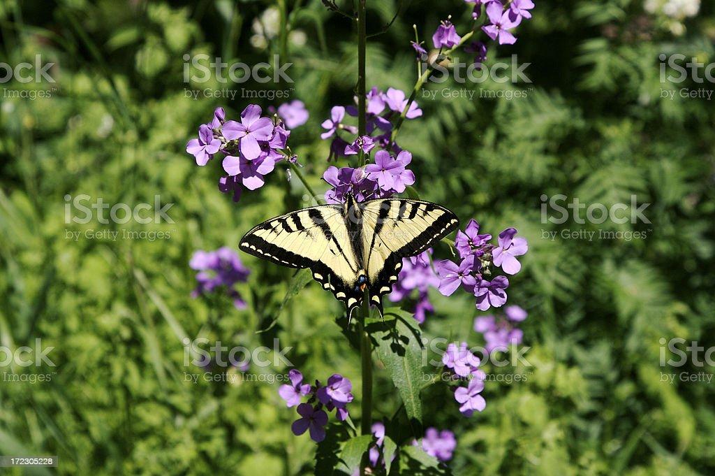 Schmetterling auf einer Blume – Foto