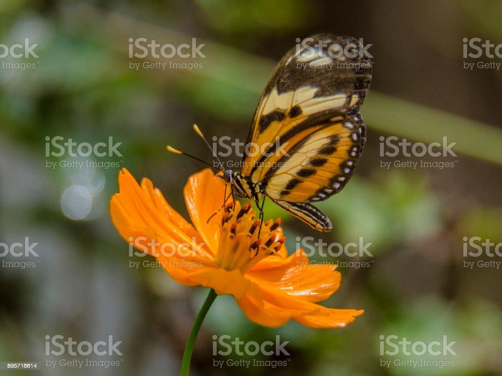 Mariposa en flor - foto de stock