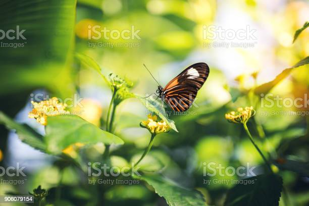 Butterfly on a flower picture id906079154?b=1&k=6&m=906079154&s=612x612&h=czkgi2aucx9mvhgyyykv8y5kw4iy4kpuayet7mq6zh4=