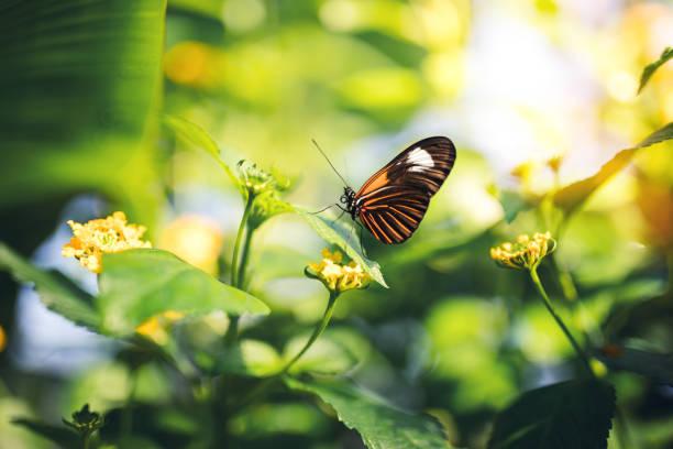 Butterfly on a flower picture id906079154?b=1&k=6&m=906079154&s=612x612&w=0&h=i tv4hmkev7 ugzajfrpv5f5finbl1uduxwilkqj98w=