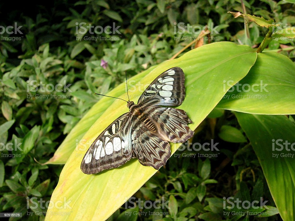 butterfly on a green leaf royalty-free stock photo