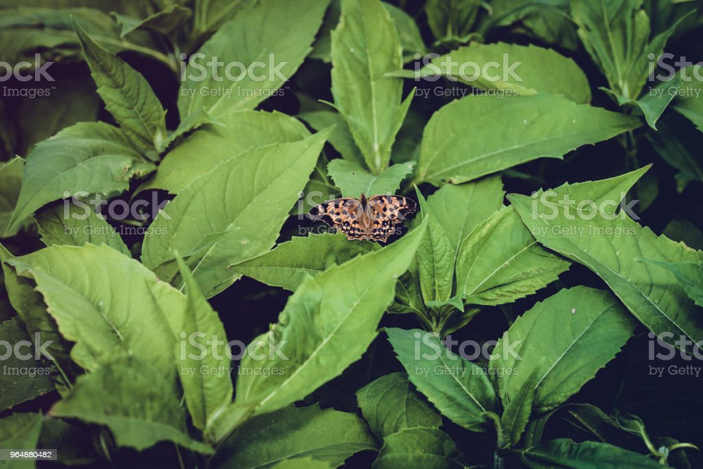 A butterfly on a green plant royalty-free stock photo