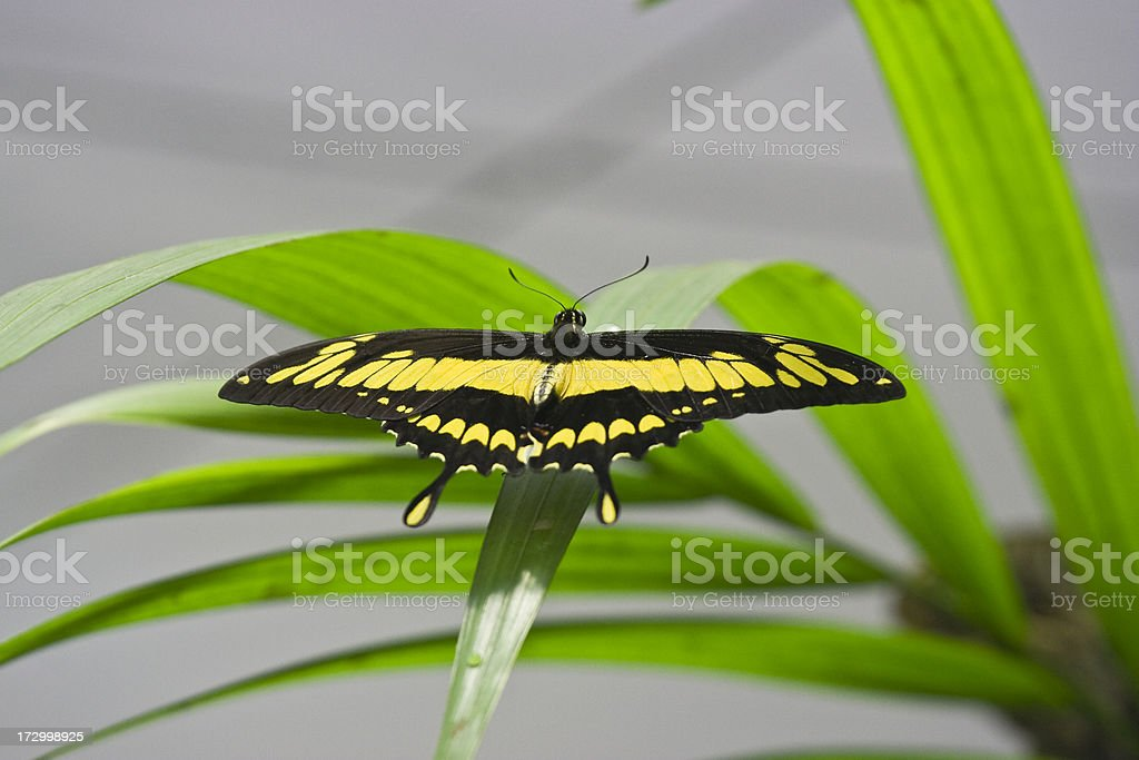 Butterfly on a leaf II stock photo