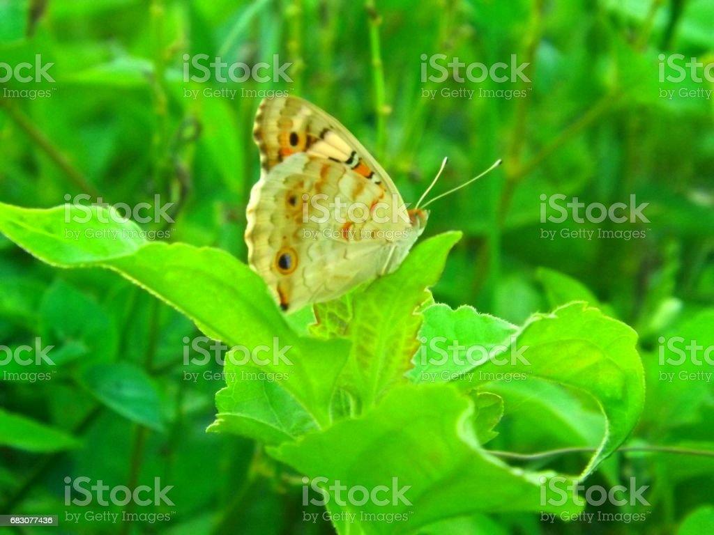 Butterfly on a leaf foto de stock royalty-free