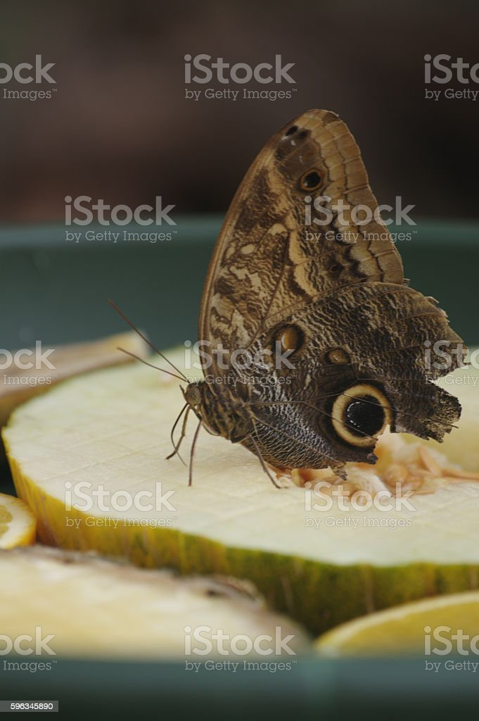 butterfly on a melon Lizenzfreies stock-foto