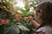 Cute and lovely child, visiting a botanical garden on her travels, holding a butterfly on an orange.