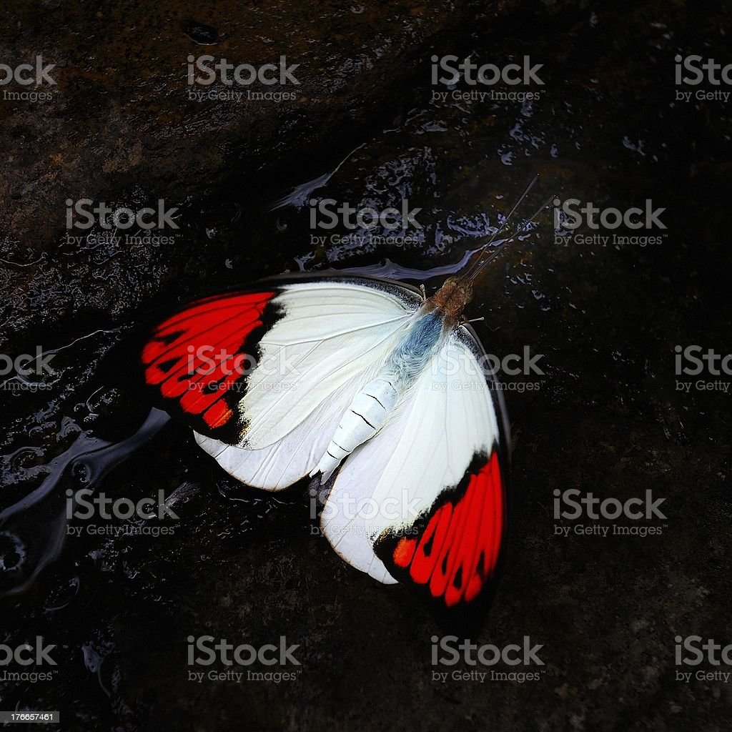 butterfly on a rock royalty-free stock photo