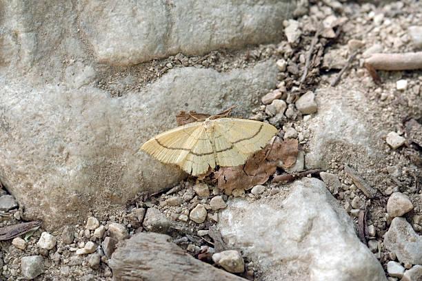Mariposa en una piedra de tierra - foto de stock