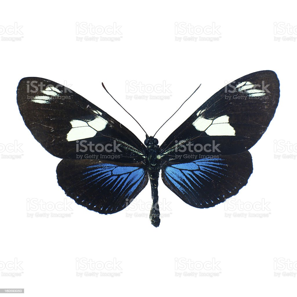 Butterfly on a white background in high definition royalty-free stock photo