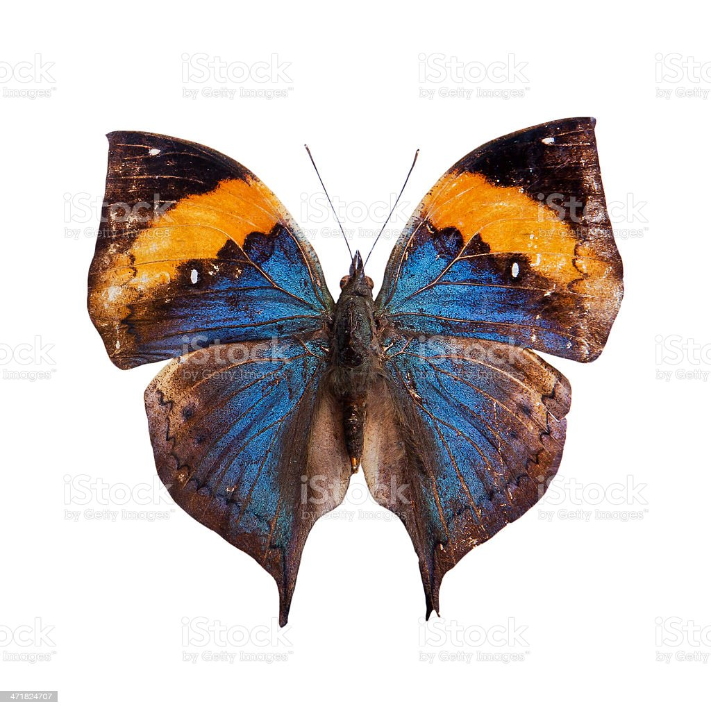Butterfly on a white background. stock photo
