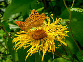 Butterfly on a yellow flower. Sunny summer day.