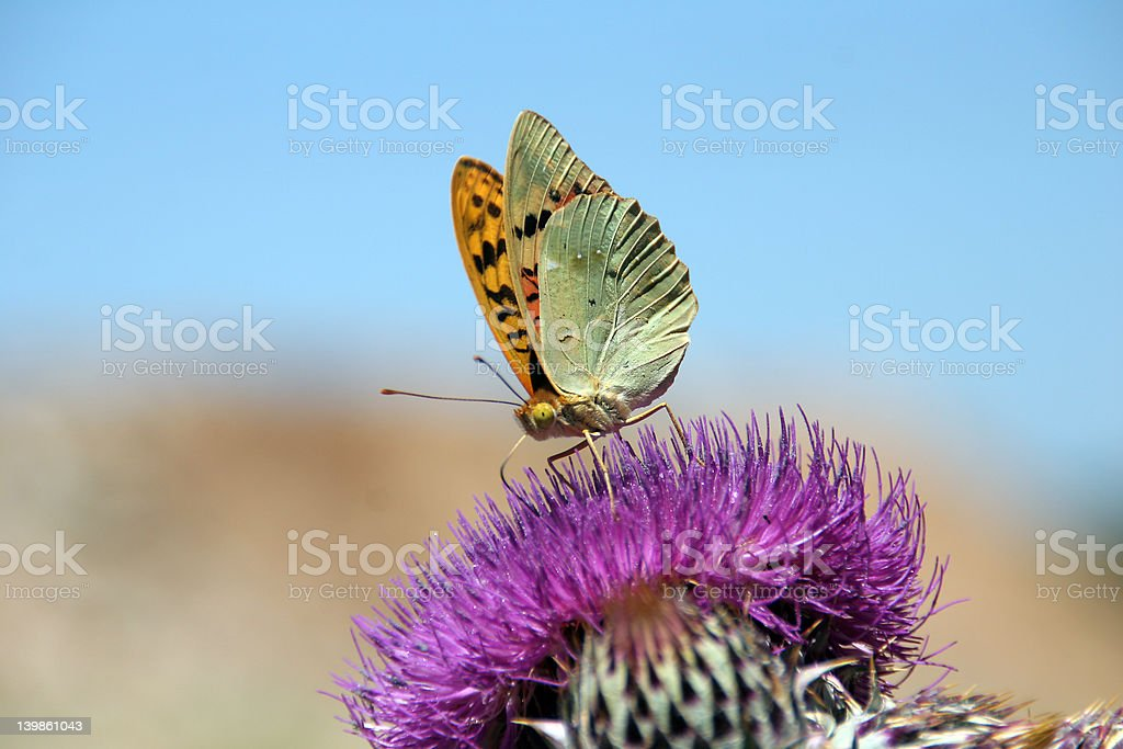 butterfly on absorption of food stock photo