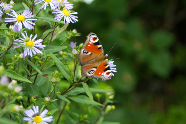 Butterfly on blue summer flowers. Sunny day stock photo