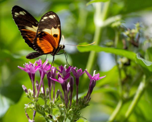Butterfly on caribbean flowers picture id1014139118?b=1&k=6&m=1014139118&s=612x612&w=0&h=ax8zxmdxvmzxgko dgg1gbc9njk2wemtlccqguu1 du=