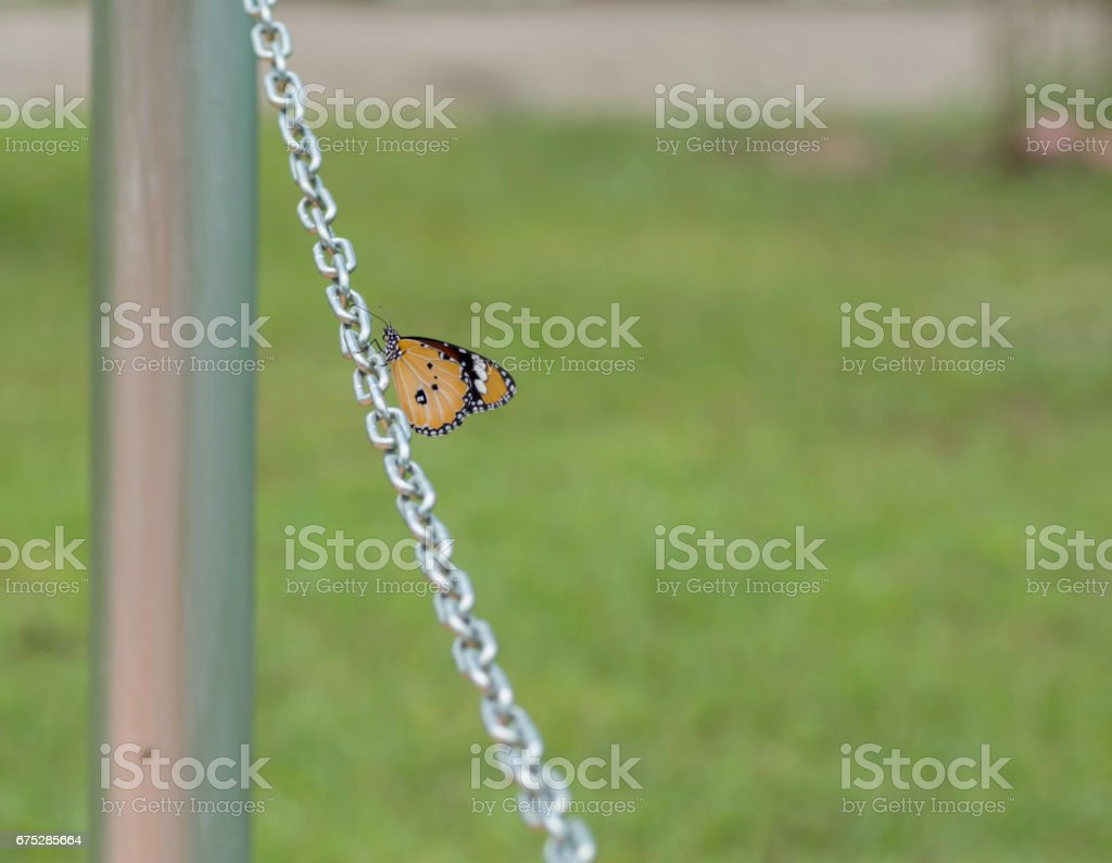 Butterfly on chain – Foto