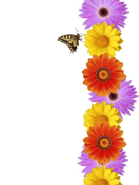 Butterfly on daisy border xxl picture id91290035?b=1&k=6&m=91290035&s=612x612&w=0&h=zldqxy5o02dvxiv9 xt3teaguz 83noqxc1w1gdbsh0=