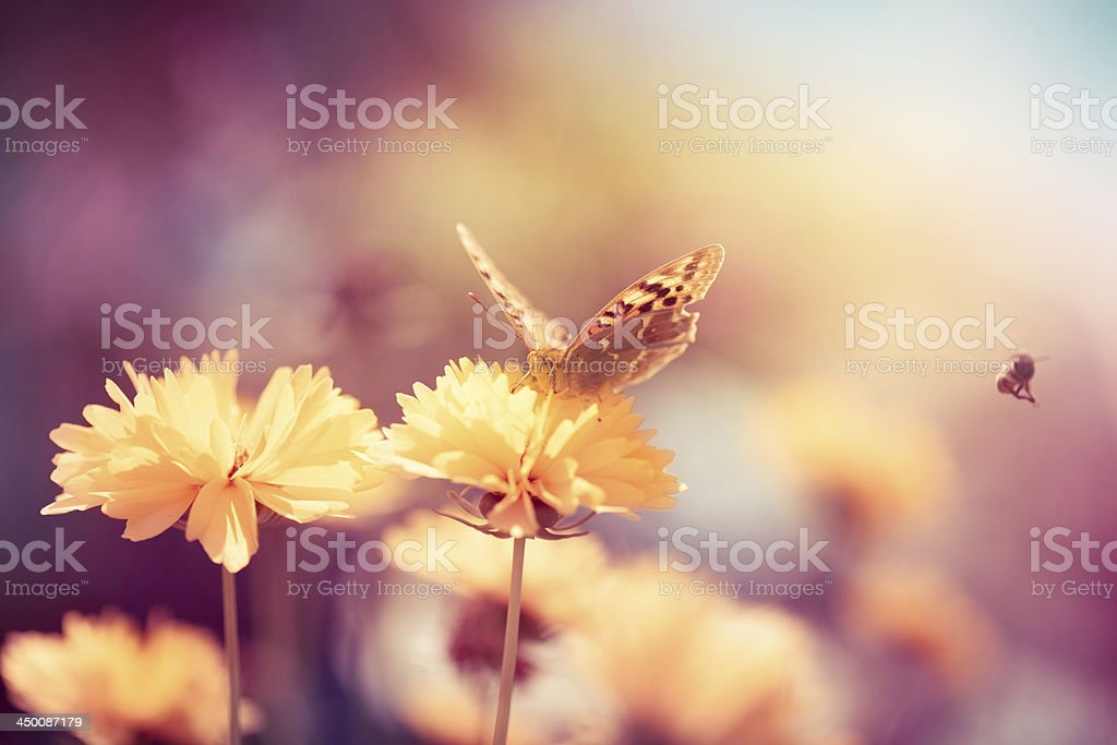 Butterfly on daisy flower, close-up royalty-free stock photo