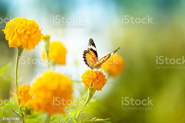 Photo of Butterfly on daisy flower, close-up