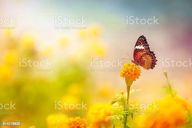 Butterfly on daisy flower closeup picture id514278830?b=1&k=6&m=514278830&s=612x612&h=lhvyck2fsiondon78gr0pgsvj7cknfsn8pxfdeslcou=
